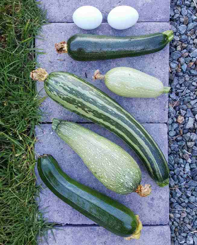 Five squash fruit are laid out in a row on top of a section of concrete pavers. Two of the squash are the typical green zucchini, the largest one has green and light green stripes, while the remaining two are more oblong and very light green to gray in color. Above the squash, there are also two blue chicken eggs in the image.