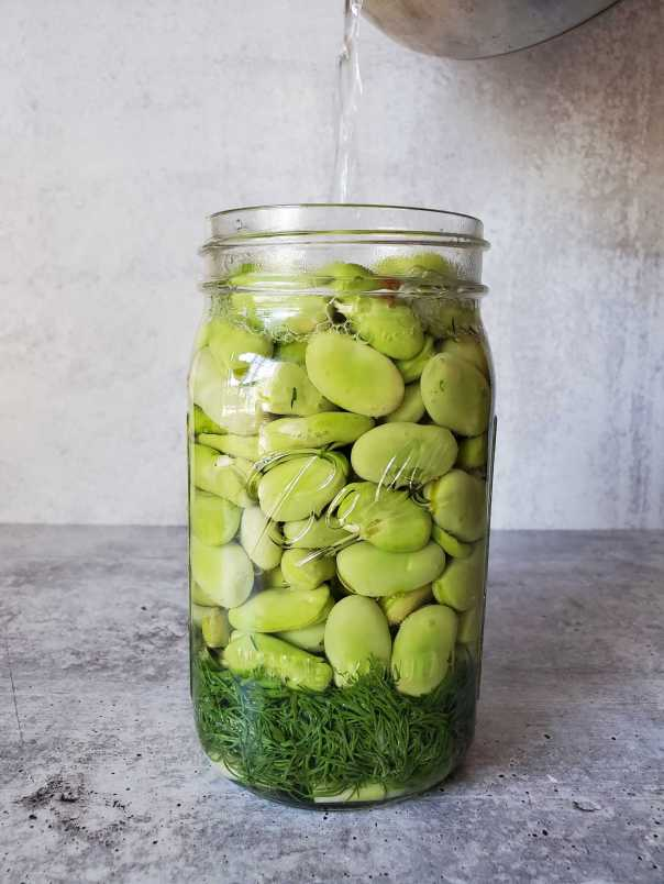 A quartmason jar full of soon to be pickled fava beans. The jar is full of loose fava beans sitting on a nest of fresh dill sprigs and garlic. A stream of vinegar brine is pouring into the jar from the top of the image.