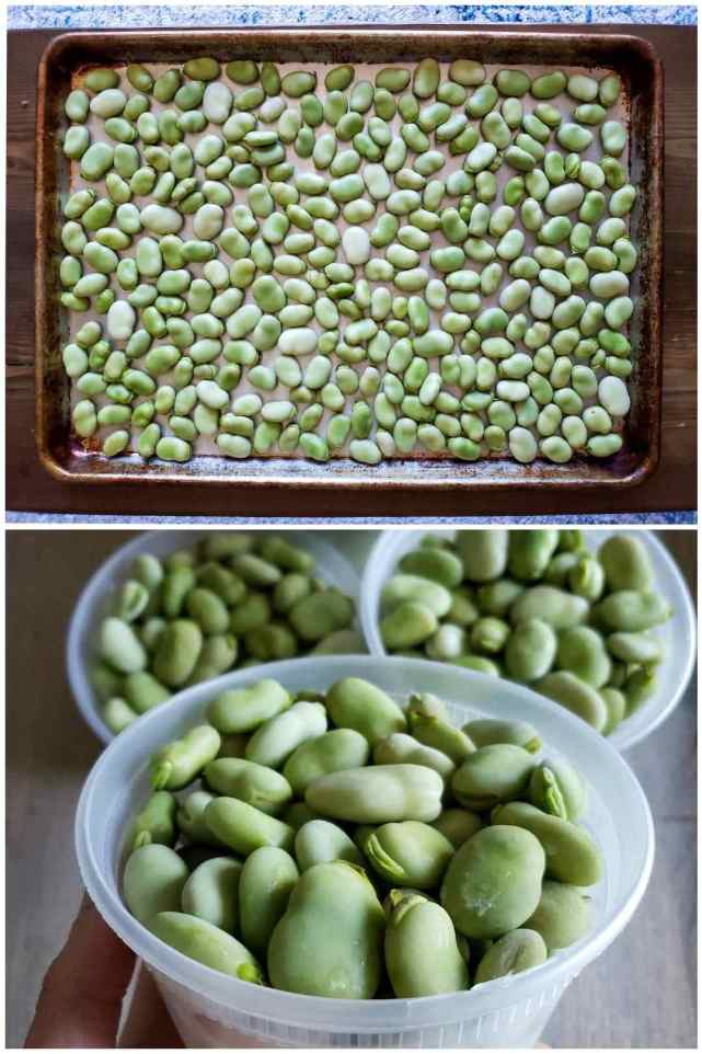 Two part image collage, the first image shows fava beans shucked from their pods spread out evenly on a baking sheet. The second image shows the fava beans packed inside BPA freezer safe pint containers after they have been frozen.