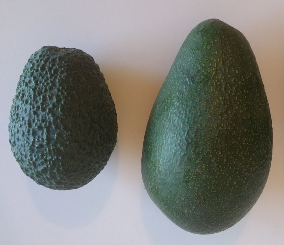 An image showing a close up of a Hass on the left and a Fuerte on the right. The Hass is more round in shape while the Fuerte is larger in size with a slightly more tapered neck.