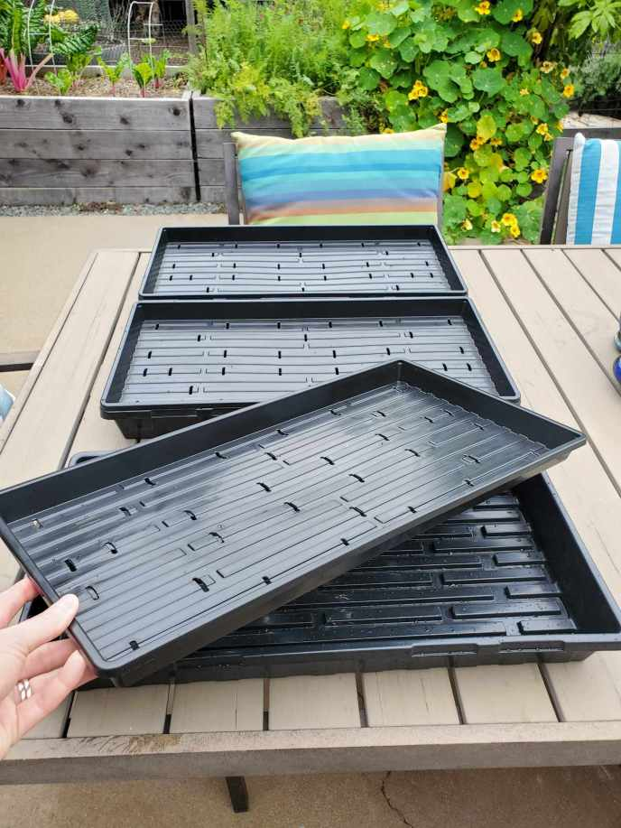 Shallow microgreen trays shown sitting atop regular 1020 trays that are used to catch water runoff. The microgreen trays are shorter in height and have small drainage slits cut in them every so often.