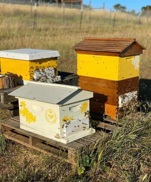 Three bee boxes are shown sitting on top of pallets in the middle of a field. Two of the boxes have roofs that are reminiscent of a house while the other roof is flat. Beekeepers help save pollinators by giving bees a safe place to call home.