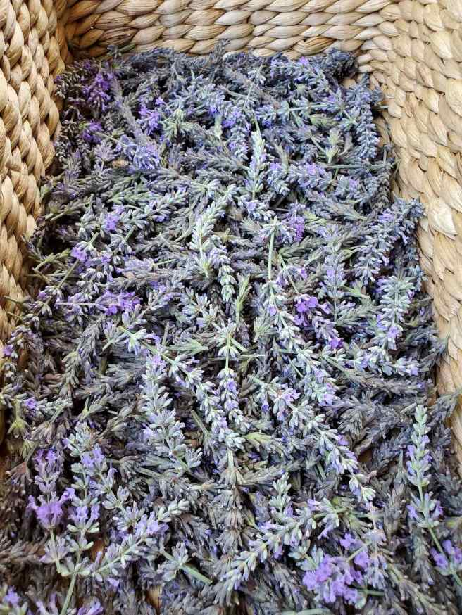 Long, slender, purple flowers on sage green stems sit a top one another piled high in a wicker basket.