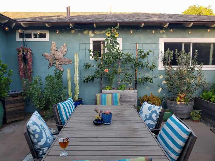 A back patio photo showing a patio table in the center. Beyond is a house with various plants, trees, and shrubs growing along its walls. An apple tree is centered in a large wooden garden bed, to the left there is cacti, fava beans, hanging jade, and parts of a bay laurel. To the right there are succulents and a pineapple guava shrub growing in a half wine barrel.