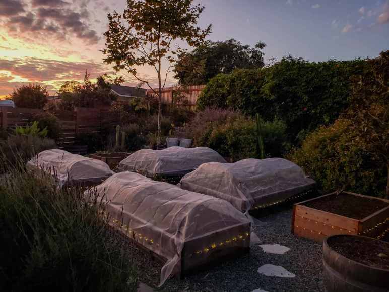 Raised garden beds are shown at dusk, covered with row covers. The sky is shown in the background, a bright glowing orange sun has illuminated the horizon with shades of pink and purple mixed in. There are various trees and plants that are visible in the dwindling light. Hoops and row covers are a gardening term that can help protect your garden.