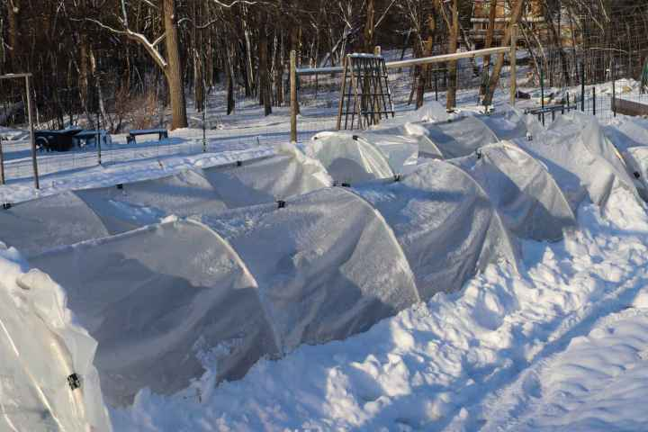Two rows of poly tunnels are shown amongst a foot or sow of snow that has covered the surrounding landscape. Hoops are used to support the thick plastic covering.