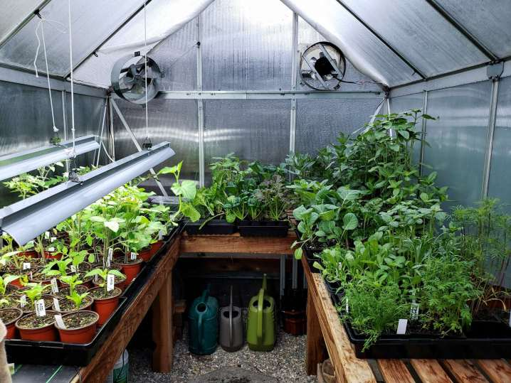 The inside of the greenhouse is shown with the benches full of tender young seedlings. There are grow lights hanging down from the greenhouse ceiling on one side and there are a number of watering cans and other seedling supplies stored away underneath the benches. Build a greenhouse bench and be able to store supplies below the benches as well as grow plants on top of them.