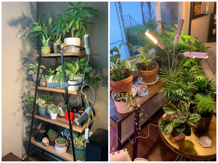 A two tier image collage, the first image has a pyramid shaped shelving unit with many potted plants on each shelf. There is a clip on houseplant light with three bulbs providing light to each tier of shelf space. The second image shows many potted plants arranged in a corner of a house with a clip on houseplant light providing additional lighting to the plants in a 360 degree direction. Using grow lights in a low light space can provide enough light for some plants.