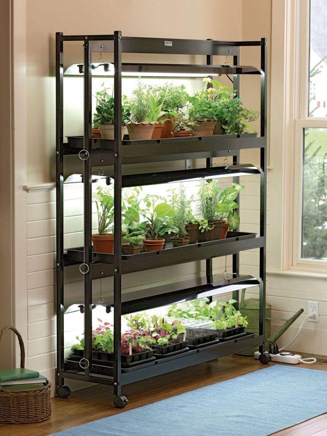 A black shelving unit with grow lights built into the top of each shelf is placed against a wall next to a window. Each shelf has various types of seedlings growing underneath two fluorescent bulbs with reflectors above each shelf. The shelving unit contains wheels and allows for adjustable lighting so you can change their height above the seedlings.