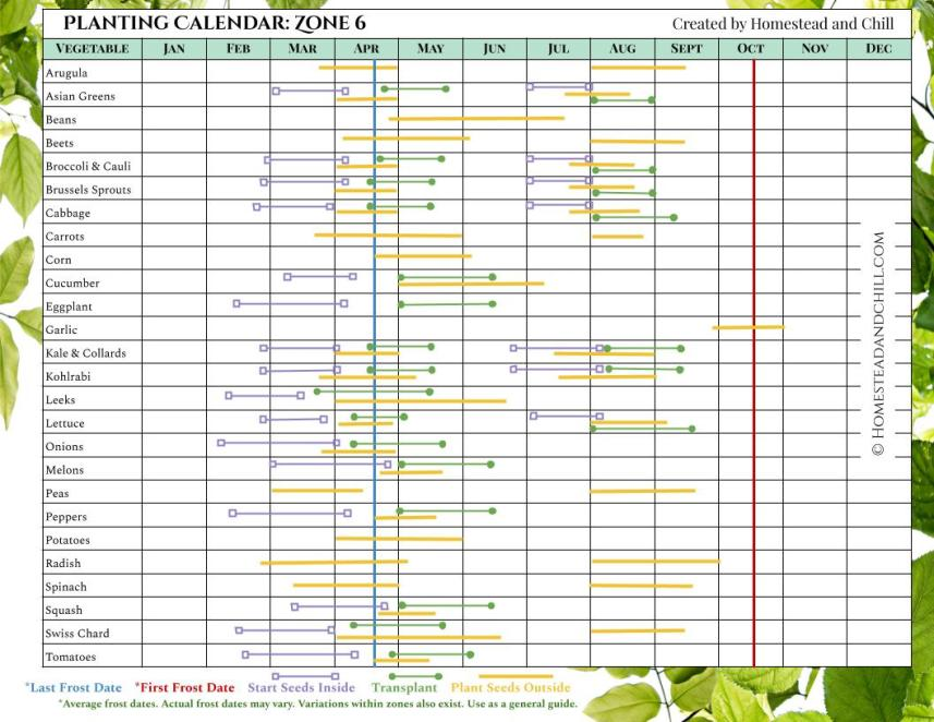 Learn when to plant seeds by using this planting calendar for Zone 6, it has many different vegetables lined up on the left side of the chart and all of the months of the year listed on the top of the chart. Each vegetable has different colored lines that correspond with when to start seeds inside, transplant outdoors, and plant seeds outside, along with corresponding last frost date and first frost date where applicable. The lines start left to right, showing what months you should do each particular task depending on the season and where you live.
