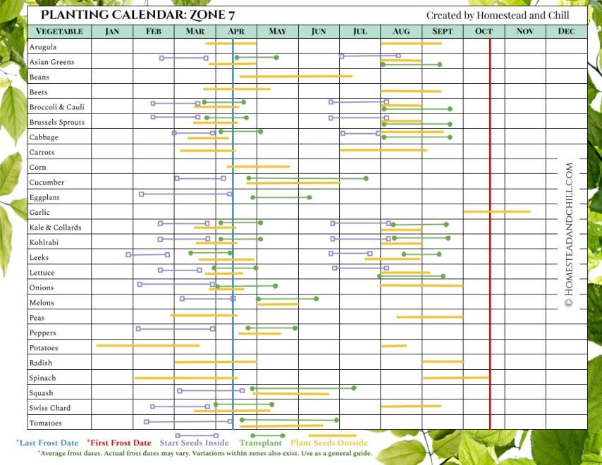 A planting calendar for Zone 7, it has many different vegetables lined up on the left side of the chart and all of the months of the year listed on the top of the chart. Each vegetable has different colored lines that correspond with when to start seeds inside, transplant outdoors, and plant seeds outside, along with corresponding last frost date and first frost date where applicable. The lines start left to right, showing what months you should do each particular task depending on the season and where you live.