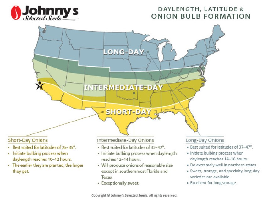 A diagram of the US with three separate regions that are color coded based on the types of onions that will grow in each area. The northern US is in the long-day area, the middle is intermediate-day and the south is short-day. There is a description of each onion type below the map with needed hours of sunlight, latitude, and growth habit.