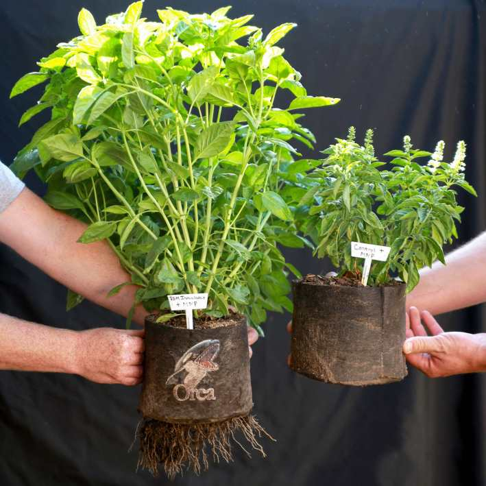 A person on each side of the image is holding a small fabric pot with a basil plant in each pot. The plant on the left is almost twice the height and width of the plant on the right.