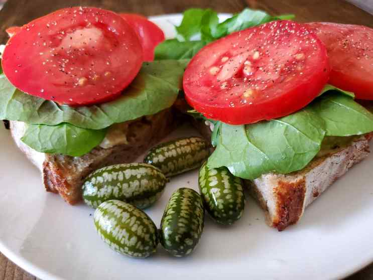 Two slices of sourdough bread sit atop a white ceramic plate. On top of each bread slice lies a bed of fresh arugula with two slice of bright red tomatoes which have been sprinkled with salt and pepper. In the gap between the two slices of bread lies five pickled cucamelons. Grow cucamelons and pickle them so you can enjoy them throughout the year.