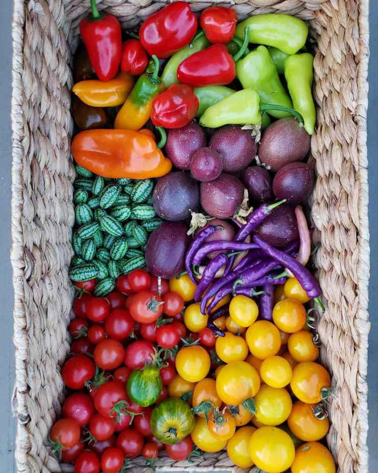 A light tan wicker basket is full of an assortment of cucamelons, golden yellow and red tomatoes, purple chili peppers, purple passion fruit, and red, orange, and green sweet peppers. Grow cucamelons to add variety to your summer harvest.