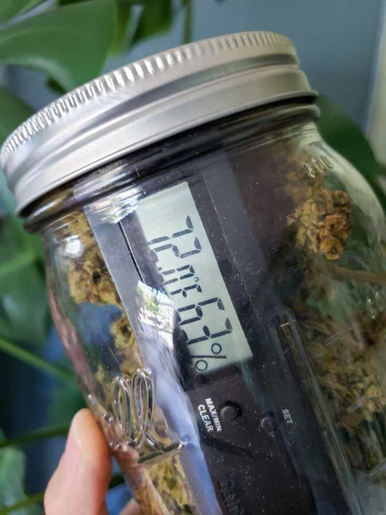 A hand is holding a jar of cannabis flowers/buds with a hygrometer inside the sealed jar, showing the temperature is 72 degrees Fahrenheit and a humidity level of 63%.