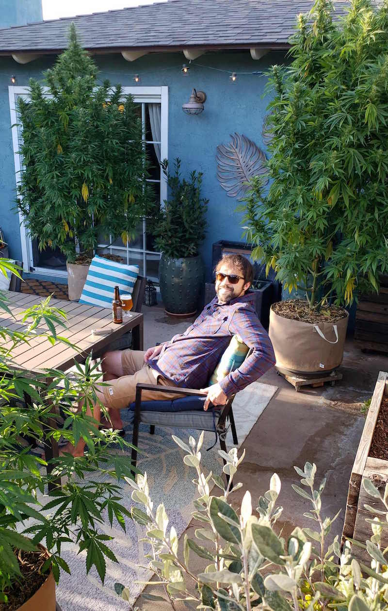 A man looking at the camera who is sitting at a backyard patio table with two large cannabis plants in fabric grow bags towering behind him. There is another cannabis plant in the foreground and also various other potted plants. The man is enjoying a beer while a vaporizer is resting next to the glass of beer.