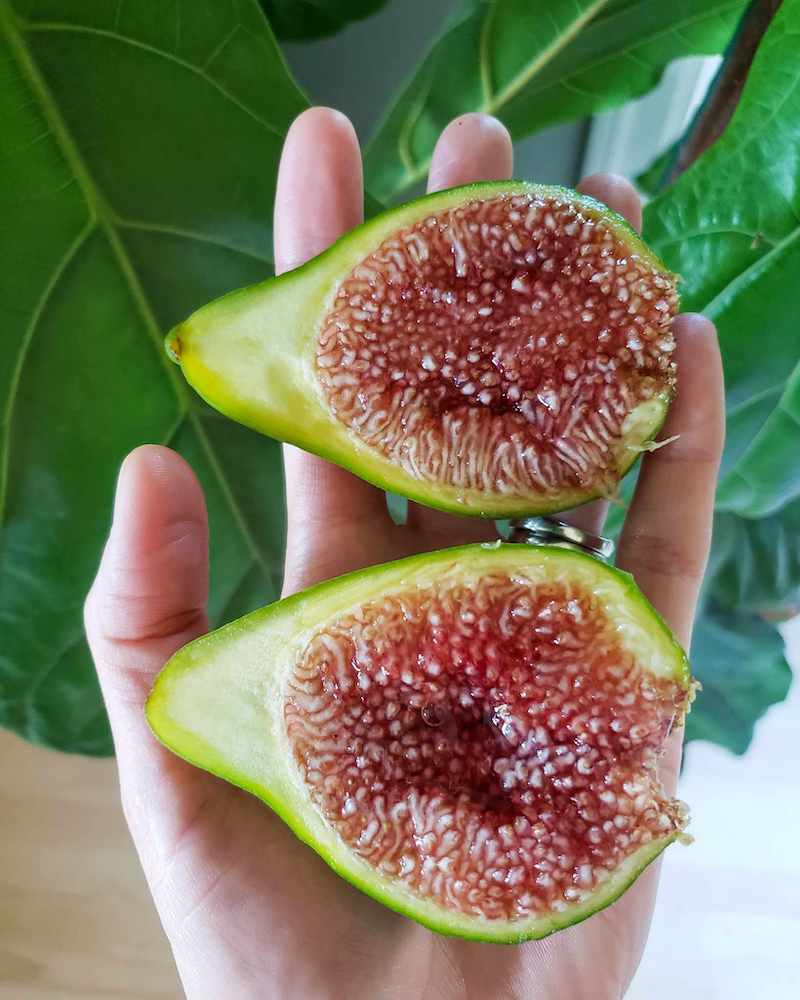 DeannaCat is holding a large fig that has been cut i half, revealing the purple/pink gooey flesh within. Grow fig trees to have an ample supply of ripe and juicy figs.