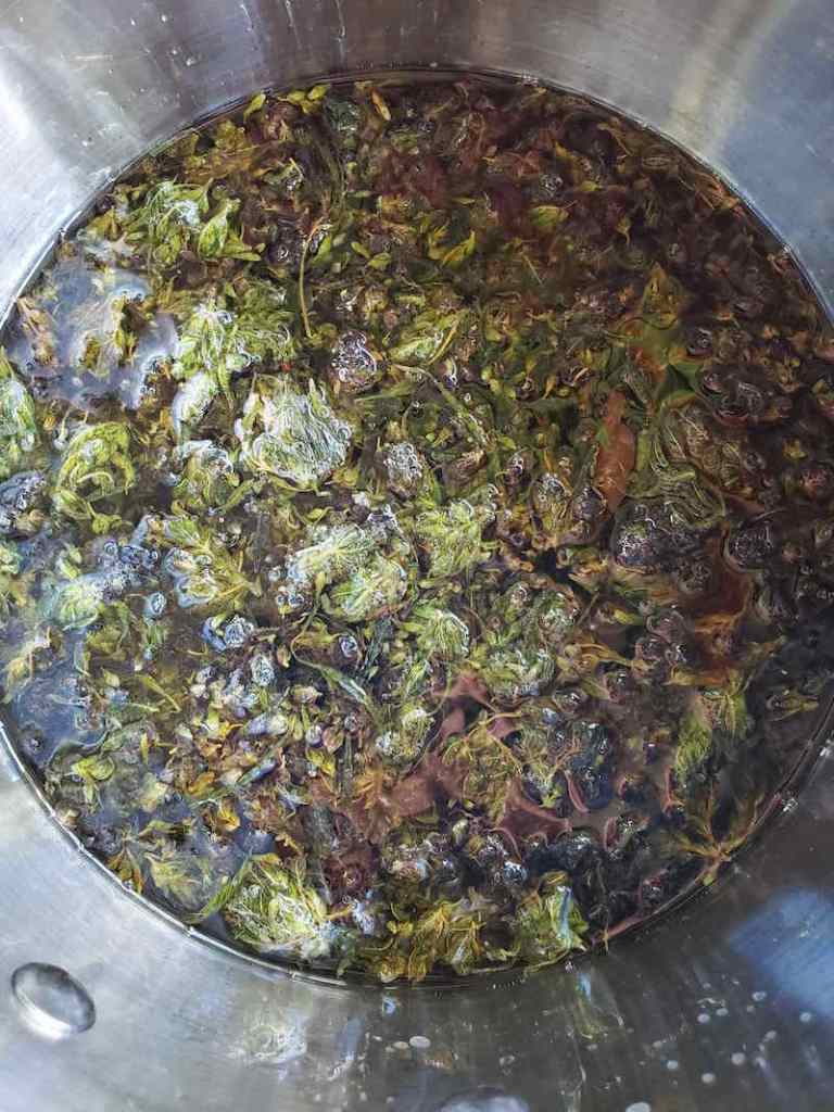 Decarboxylated cannabis infusing coconut oil inside of a stainless steel pot.