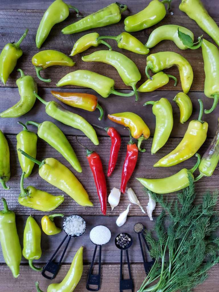 Many green/yellow banana peppers and a few red cayenne peppers litter a barn wood surface. There are also cloves of garlic, a few sprigs of dill, salt, sugar, peppercorns, and celery seed each in their own measuring spoon in the middle/front of the peppers. These are the ingredients for the recipe.