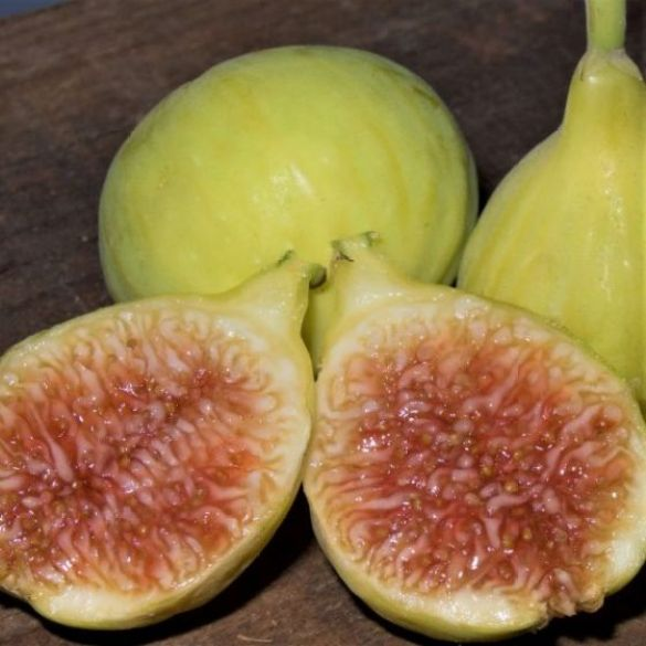 Two golden yellow green figs sit in the background while a fig that has been cut in half is using the figs in the back as a prop to sit themselves up slightly. Their flesh is honey amber in color, fig varieties vary on the color of their skin as well as the color of their flesh.