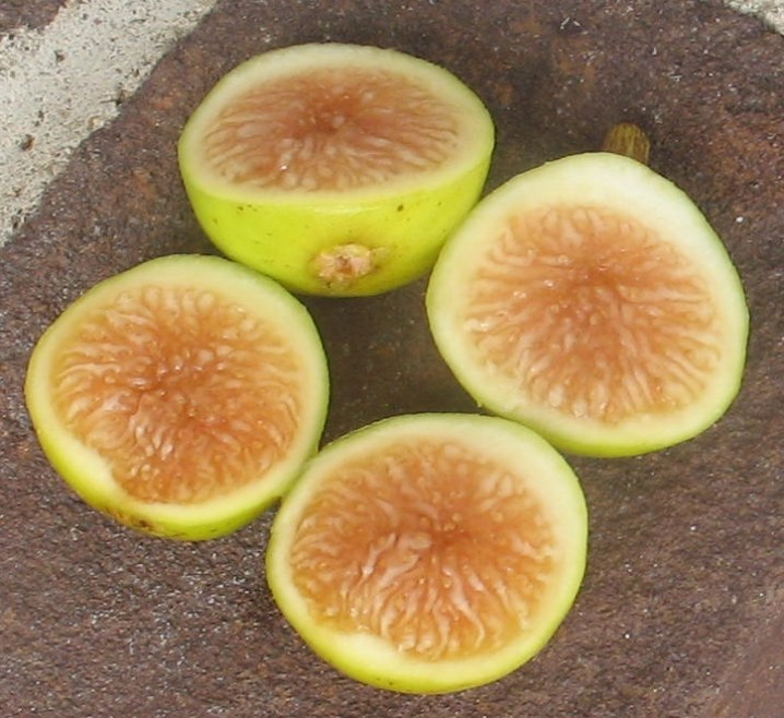 Four halves of figs have their rosy golden pulp facing upwards. Their light green to yellow skin is visible along the their sides.