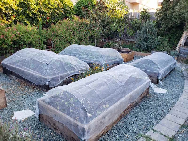 Four raised wooden garden beds are covered with floating row covers with the assistance of hoops to keep the covers elevated off the plants below. There are many bushes, shrubs, and trees lining the perimeter of the garden.