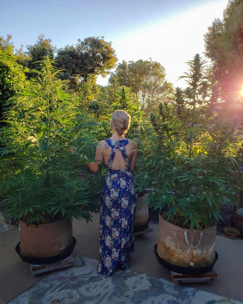DeannaCat standing amongst mature cannabis plants in various stages of flower. The evening sun is shining in through trees casting a warm glow. She is wearing a blue dress with a floral/plant pattern.