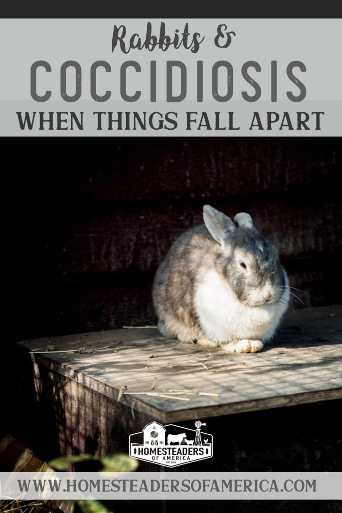 Rabbits & Coccidiosis: When Things Fall Apart