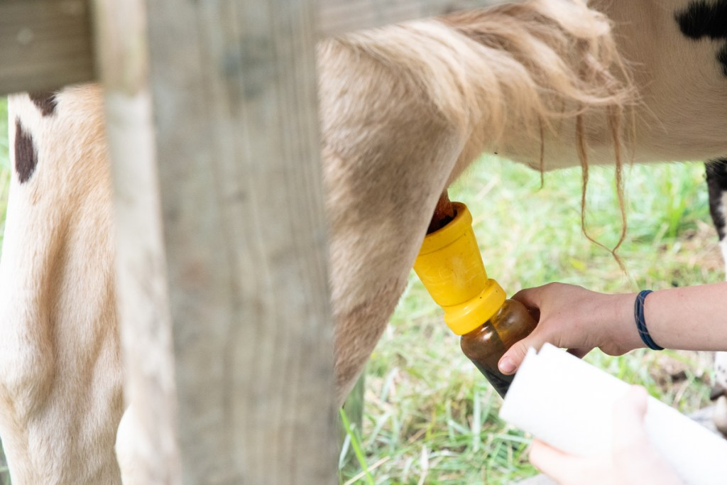 Iodine Teat Dip for Family Cow