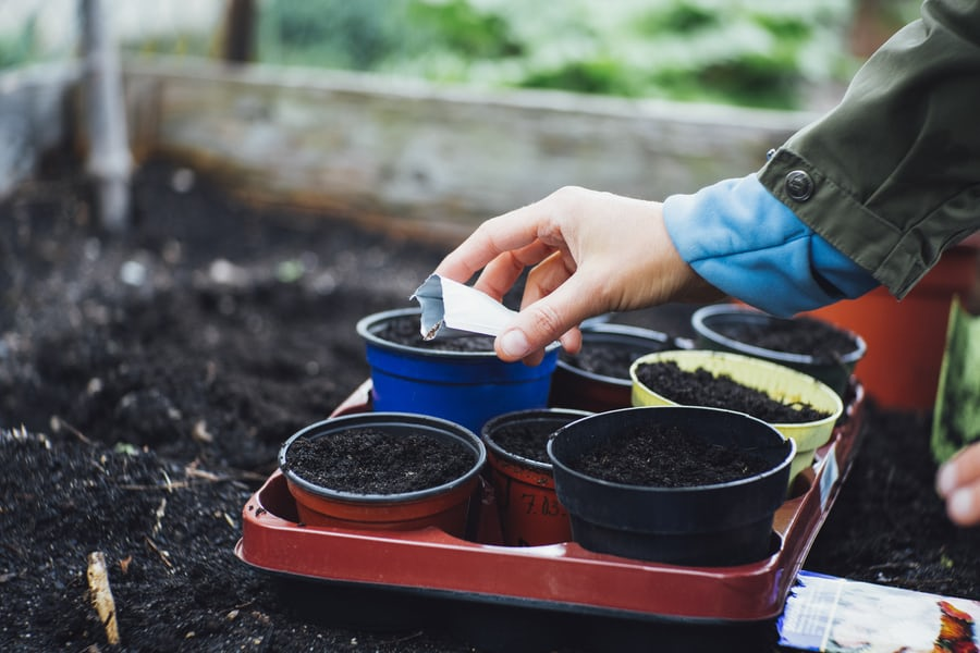 Sowing Seeds for Small Garden