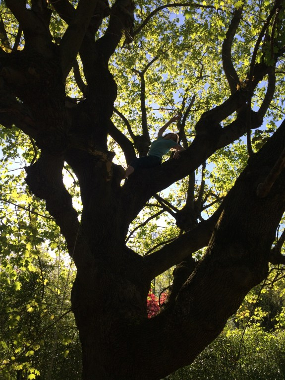 Silhouettes in trees