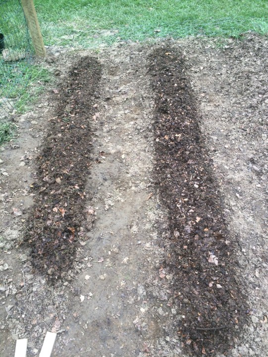 Freshly planted beans and beets