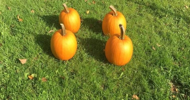 How to Store Pumpkins–Three Ways!