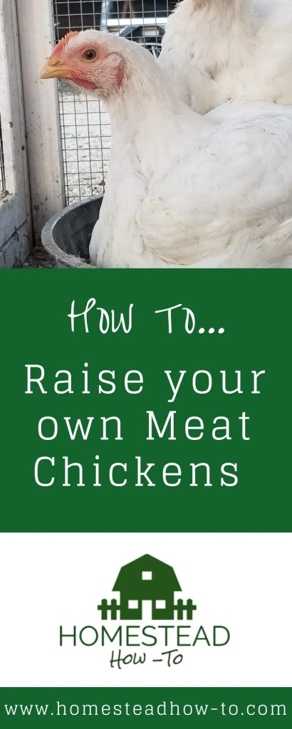 How to Raise your Own Meat Chickens