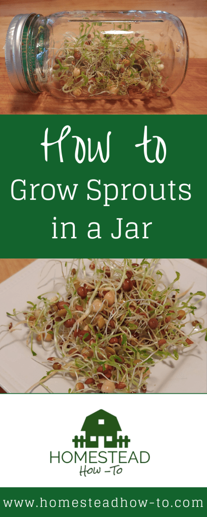How to grow sprouts PIN