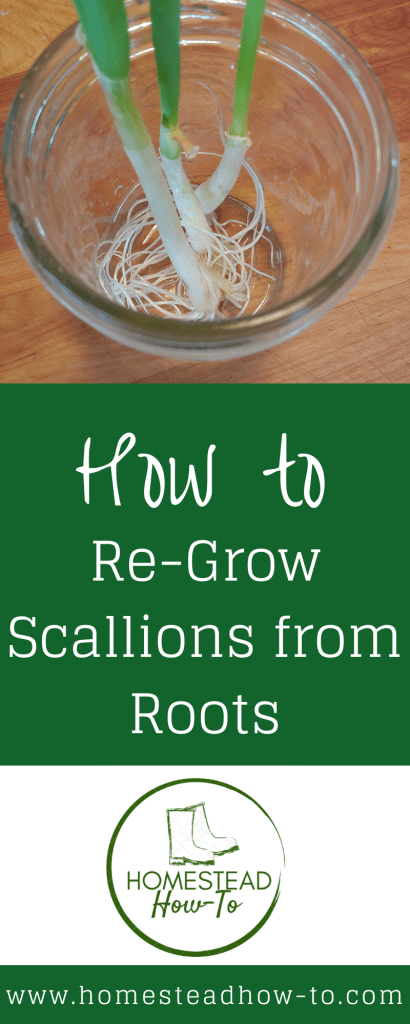 Re-growing scallions PIN