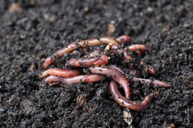 Worm Farming | Gardening Tips To Earn Your Most Fruitful Yield Yet