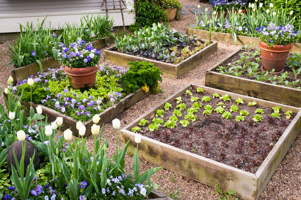 How to build the best raised garden beds