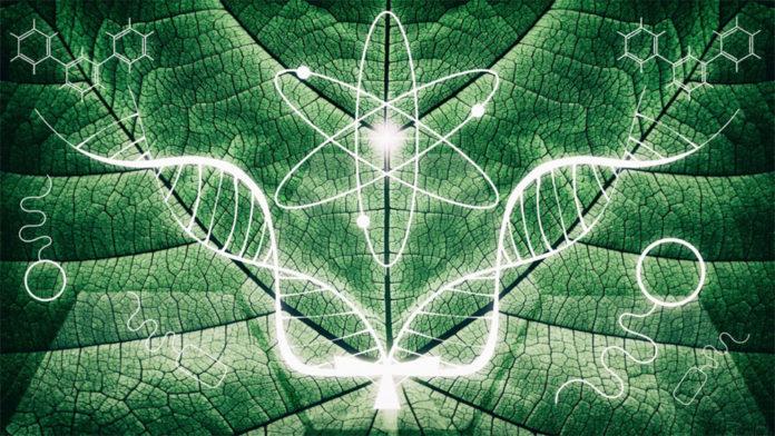 biomimicry-696x392