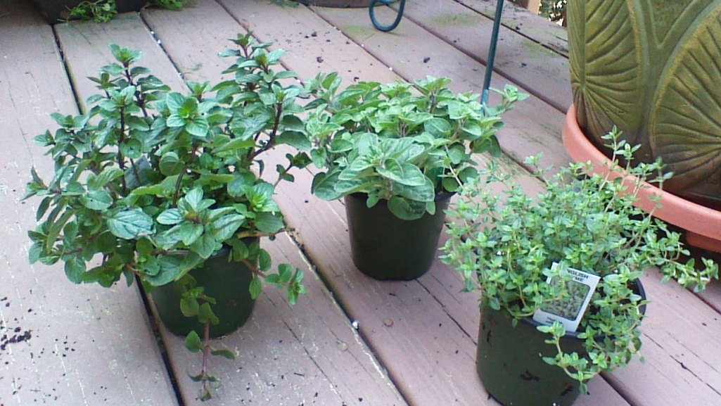 herb baskets 2