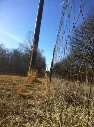 Dog fencing pic 1
