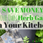 Save Money! Start Your Own Herb Garden In Your Kitchen