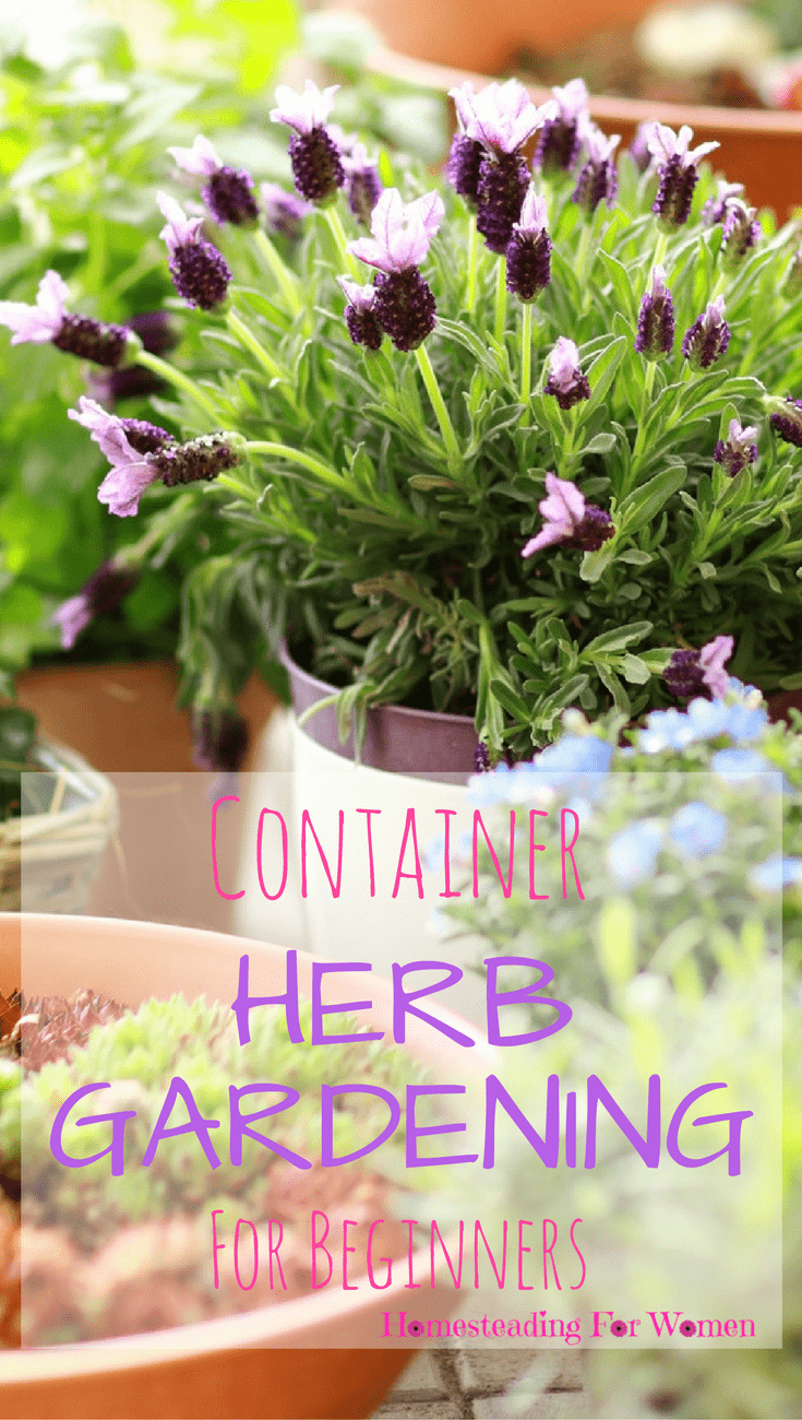 Amazing Container Herb Gardening For Beginners (1)