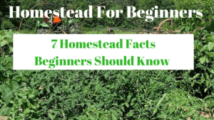 7 Homestead Facts Beginners Should Know |Homestead For Beginners