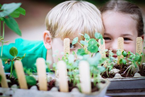 Indoor Herb Garden kit for kids