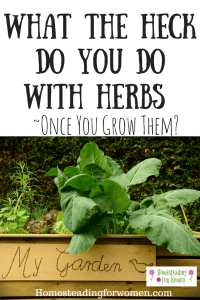 What The Heck Do You Do With Herbs ~Once You Grow Them?