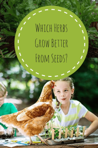 Which Herbs Do Better Grown From Seeds?
