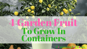 4 Garden Fruit To Grow In Containers