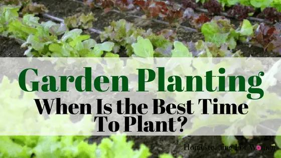 Garden Planting Vegetables